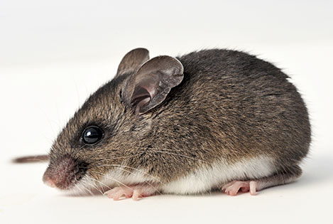 Hazards of rodents in self storage lockers and mini storage